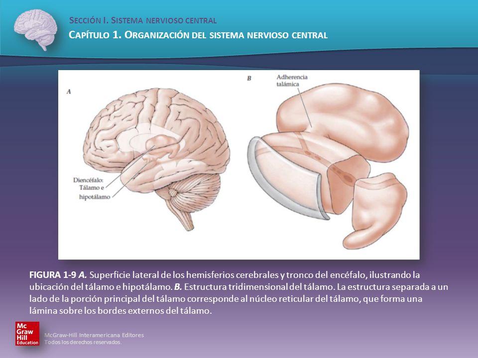 Sección I. Sistema nervioso central - ppt descargar