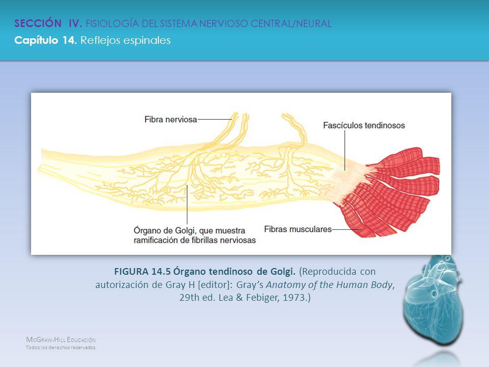 Atractivo Capítulo 14 De La Anatomía Y Fisiología Patrón - Imágenes ...
