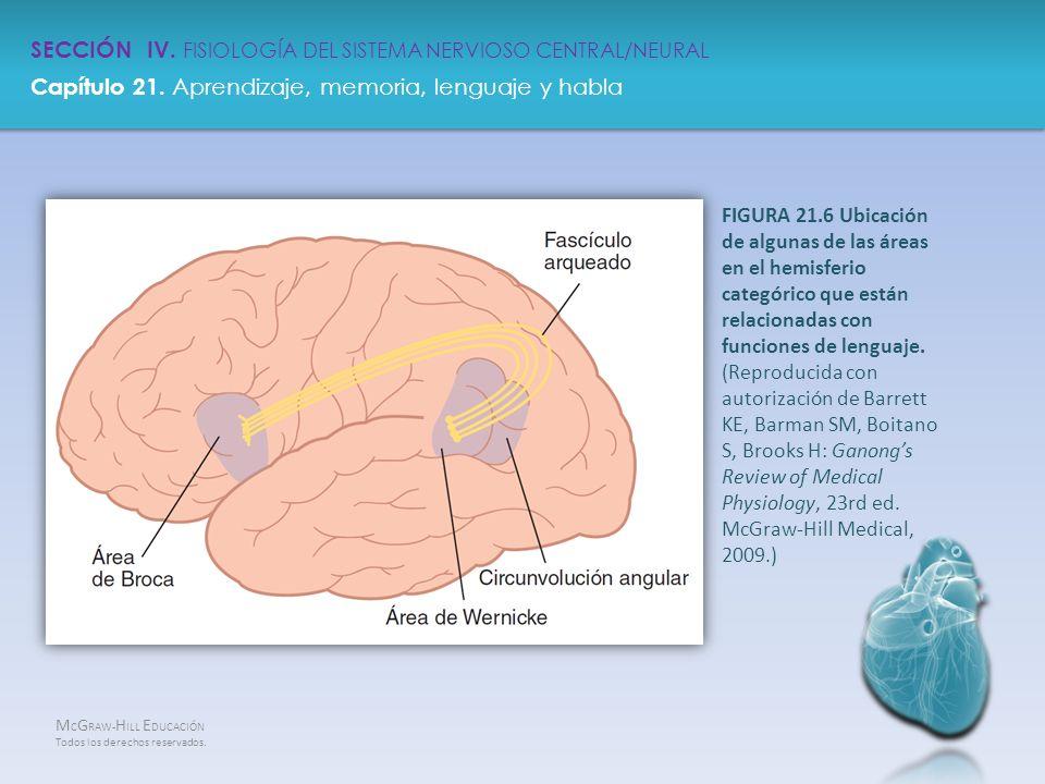 SECCIÓN IV FISIOLOGÍA DEL SISTEMANERVIOSO CENTRAL/NEURAL - ppt descargar