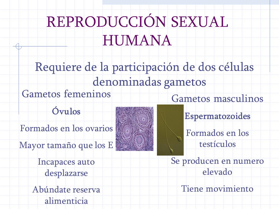 REPRODUCCIÓN SEXUAL HUMANA