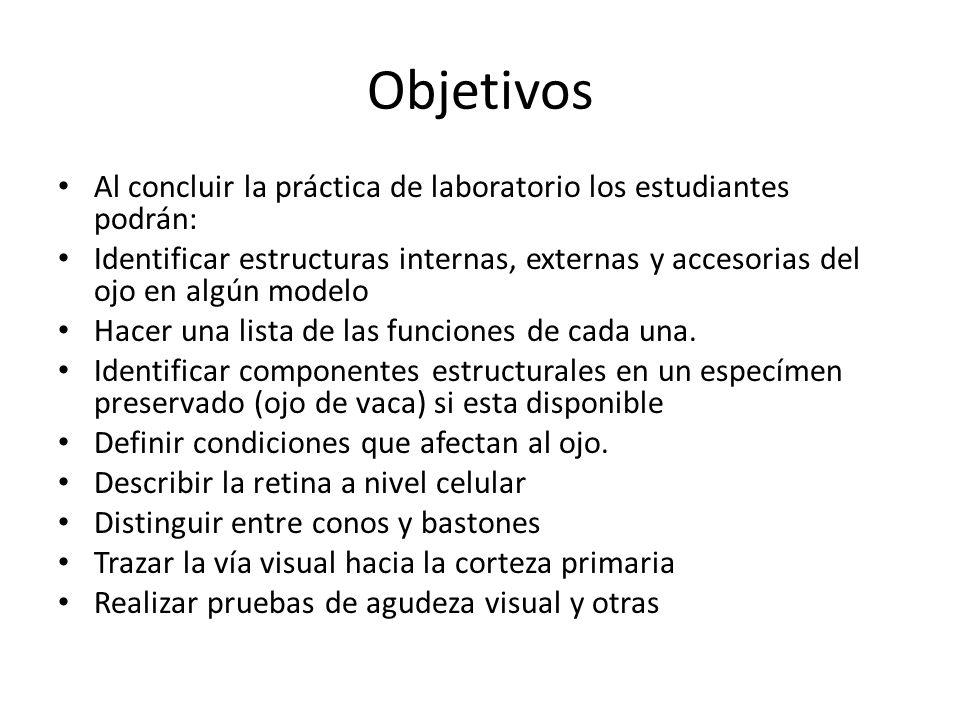 Sentidos Especiales: Visión Anatomía y Fisiología - ppt video online ...