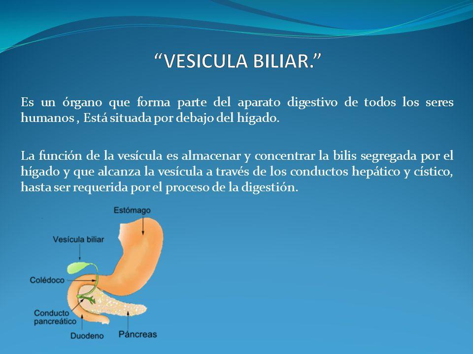 """VESICULA BILIAR."""" Es un órgano que forma parte del aparato digestivo ..."""