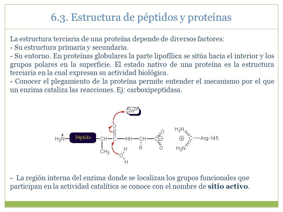 Aminoácidos Péptidos Y Proteínas Ppt Video Online Descargar