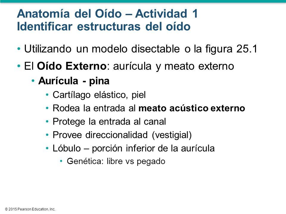 Sentidos Especiales: Audición Anatomía y Fisiología - ppt descargar