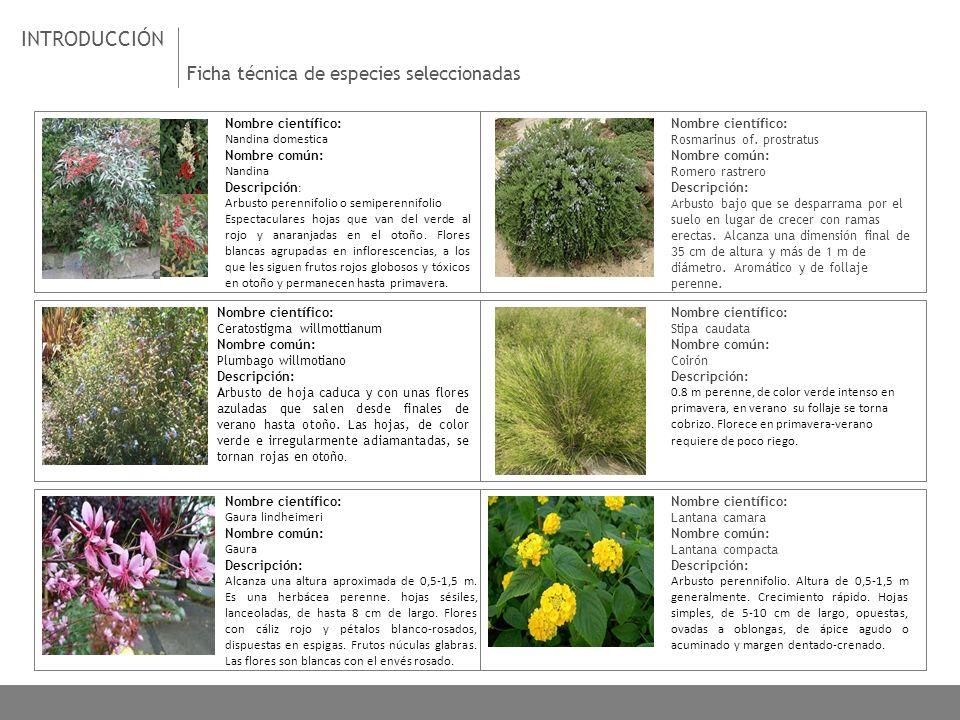 INTRODUCCIÓN Ficha técnica de especies seleccionadas - ppt descargar