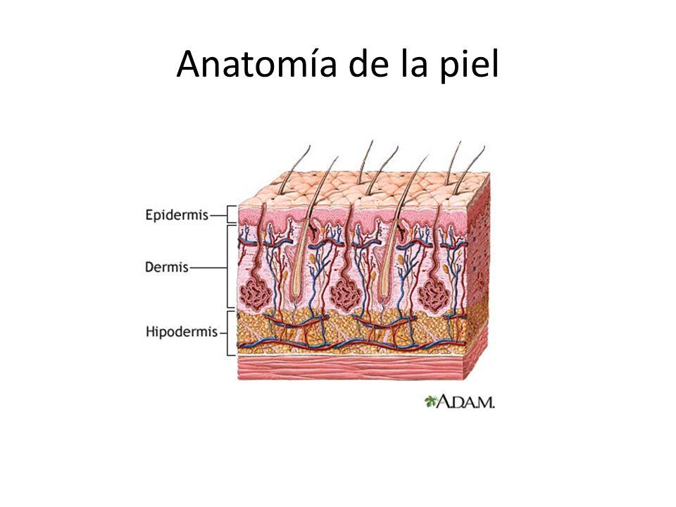 Dermatología. - ppt descargar