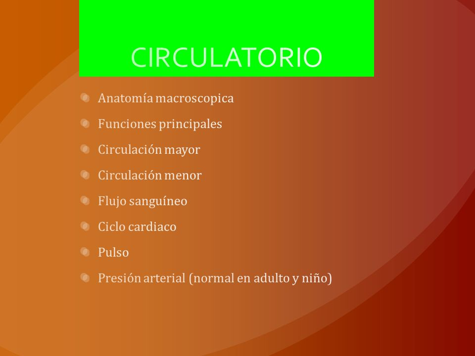 CIRCULATORIO Anatomía macroscopica Funciones principales - ppt descargar
