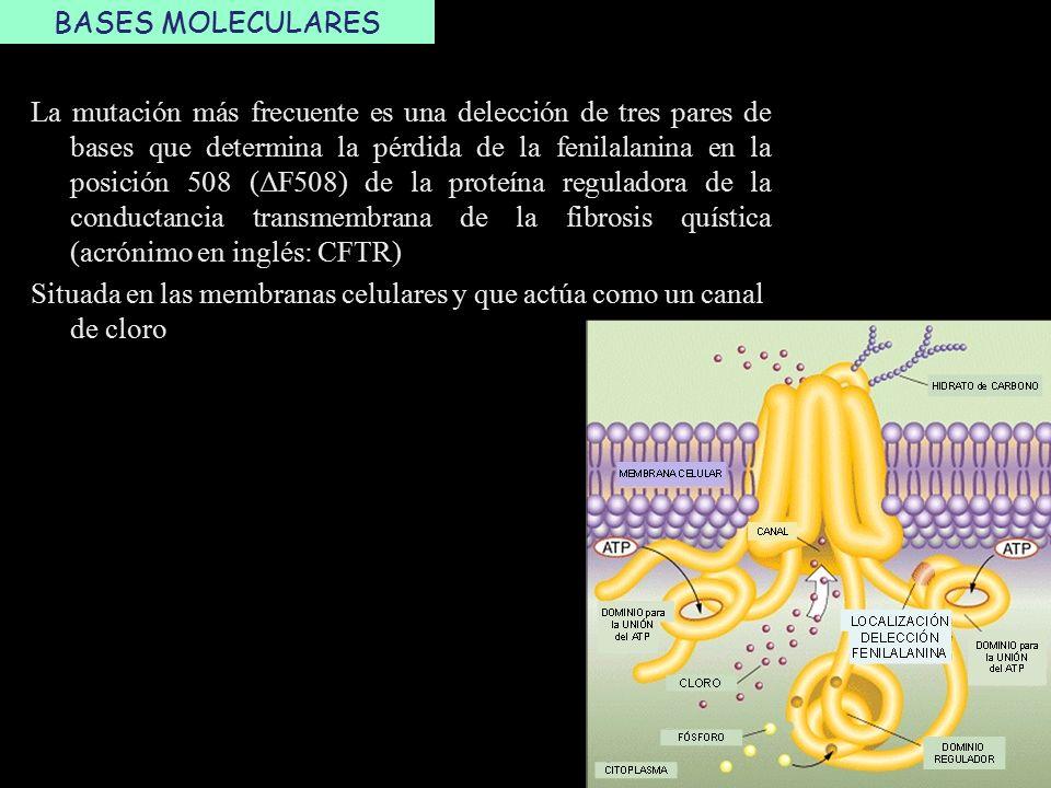 La Fibrosis Quística es una enfermedad genética autosómica recesiva ...
