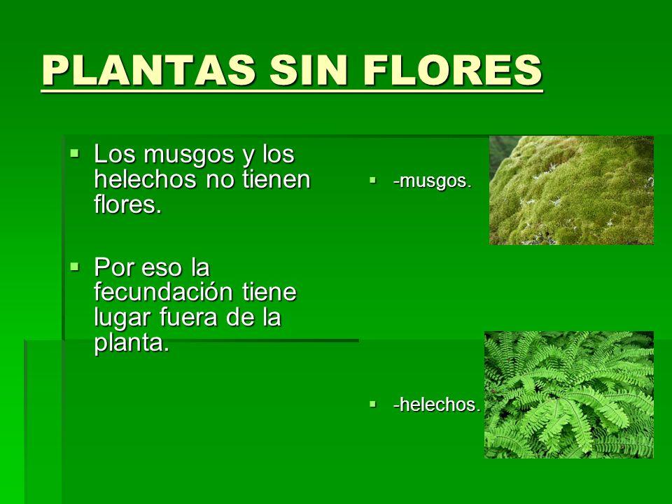 Las Plantas Las Plantas Lucia Galan Torija 5ºa Lucia Galan Torija