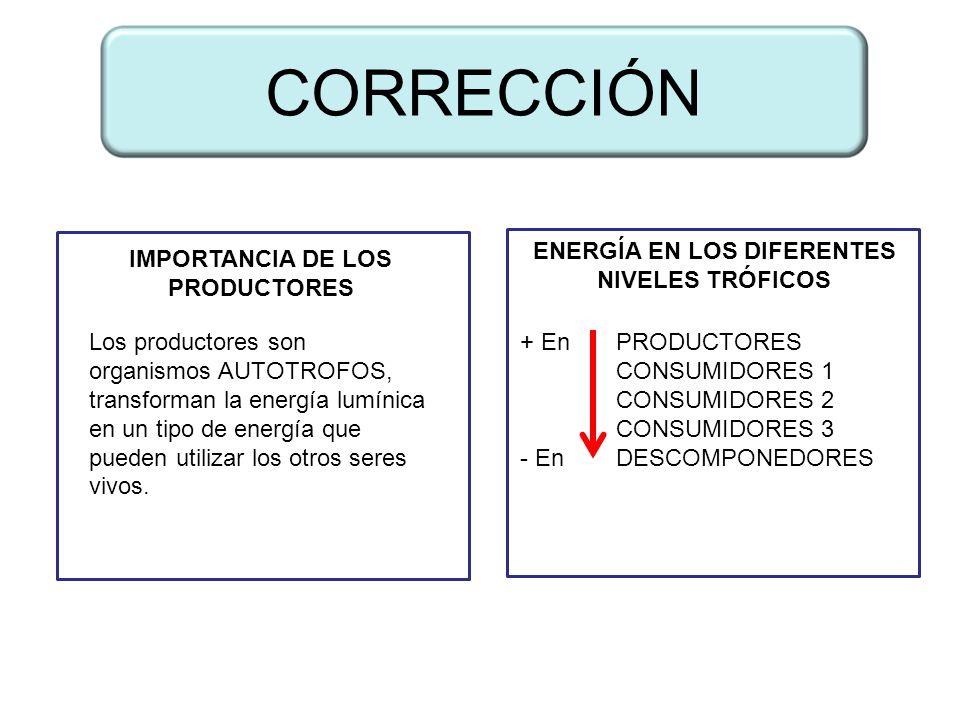 DIFERENCIA ENTRE CADENA Y TRAMA TRÓFICA PRINCIPALES NIVELES TRÓFICOS ...