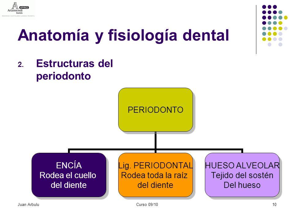 Excepcional Anatomía Y Fisiología De Los Dientes Embellecimiento ...