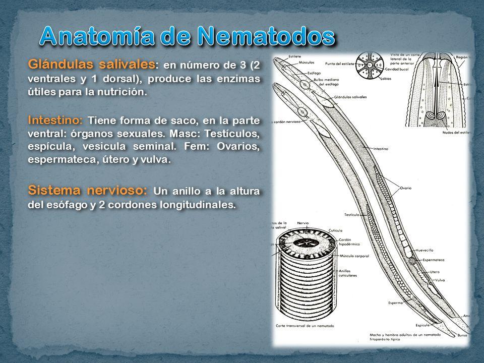 Nematodos Heterodera glycine , Soya. - ppt descargar