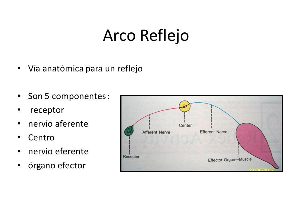 Examen neurológico de los reflejos primitivos - ppt video online ...