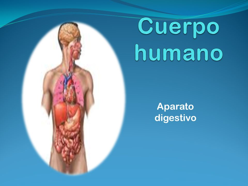 Cuerpo humano Aparato digestivo. - ppt descargar