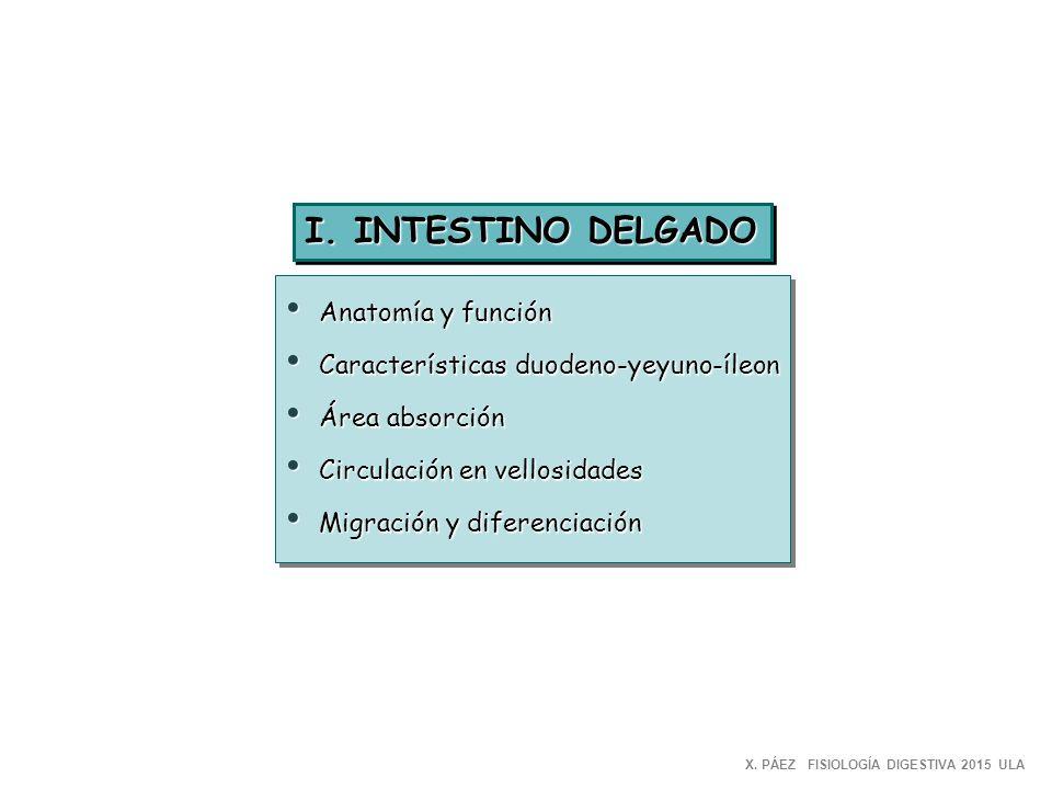 Universidad de los Andes FISIOLOGIA para MEDICINA - ppt descargar