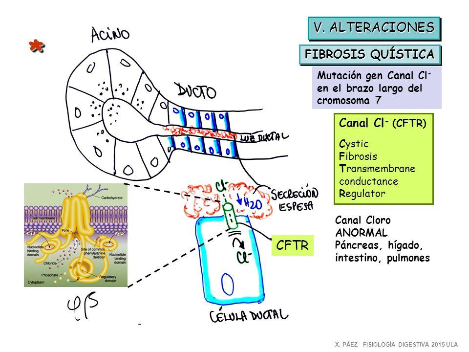Universidad de los Andes FISIOLOGIA para MEDICINA - ppt video online ...
