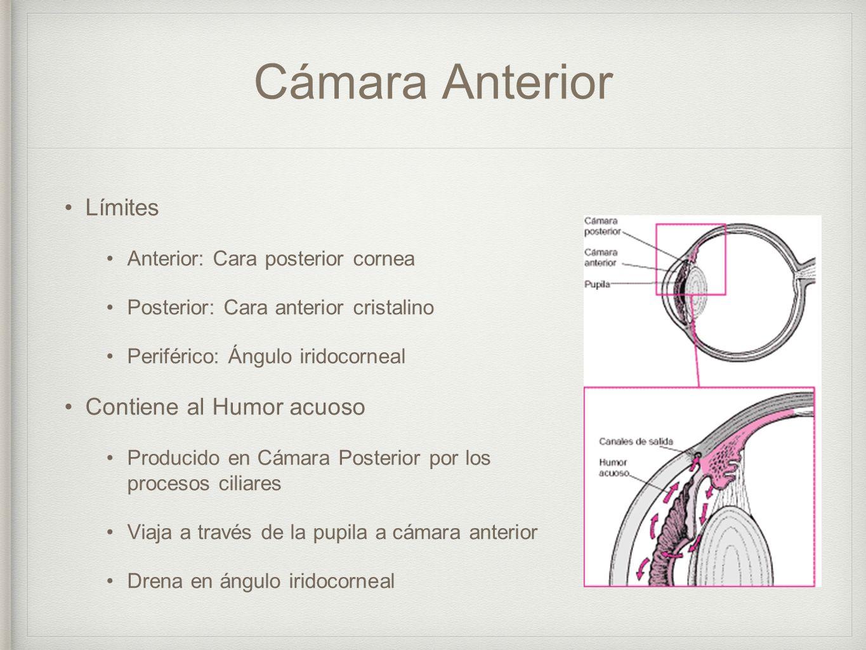 Introducción a la anatomía y fisiología ocular - ppt descargar