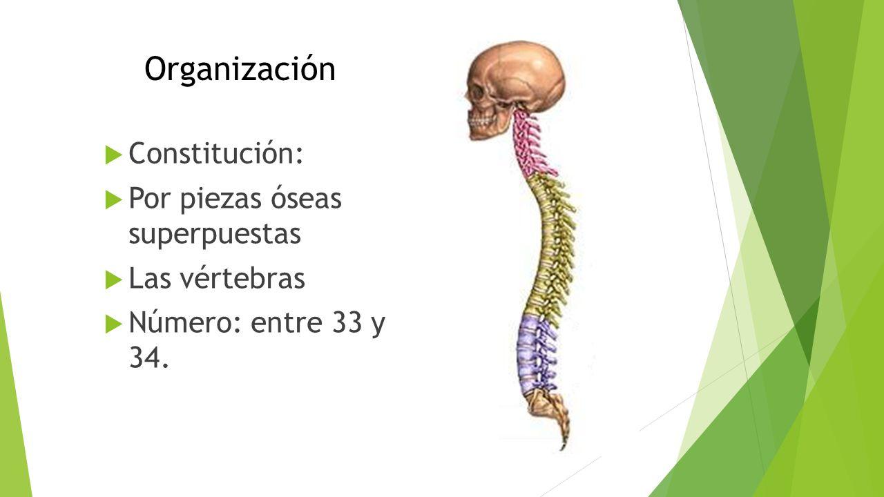 Universidad Autónoma del Estado de México Facultad de Medicina ...