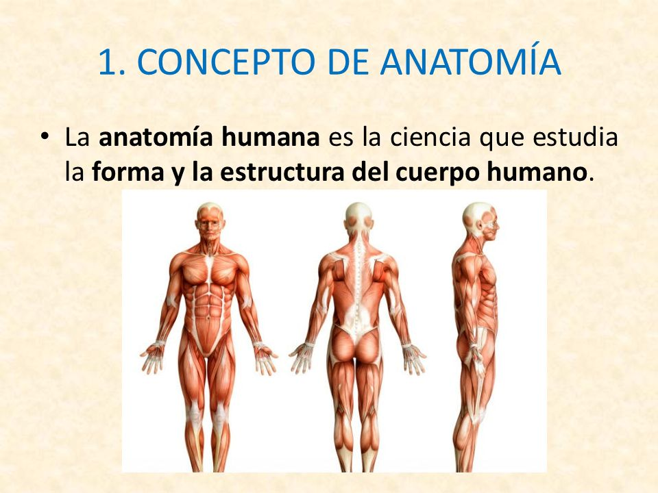 INTRODUCCIÓN A LA ANATOMÍA - ppt descargar