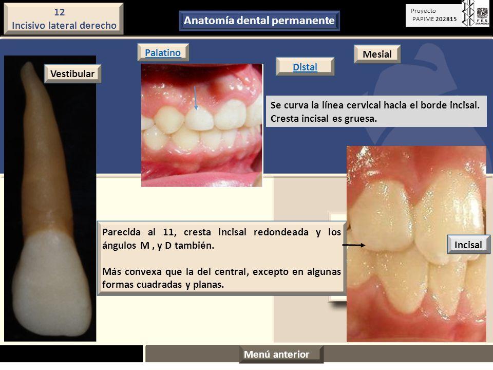 Bonito Anatomía Dental Fotos Regalo - Imágenes de Anatomía Humana ...