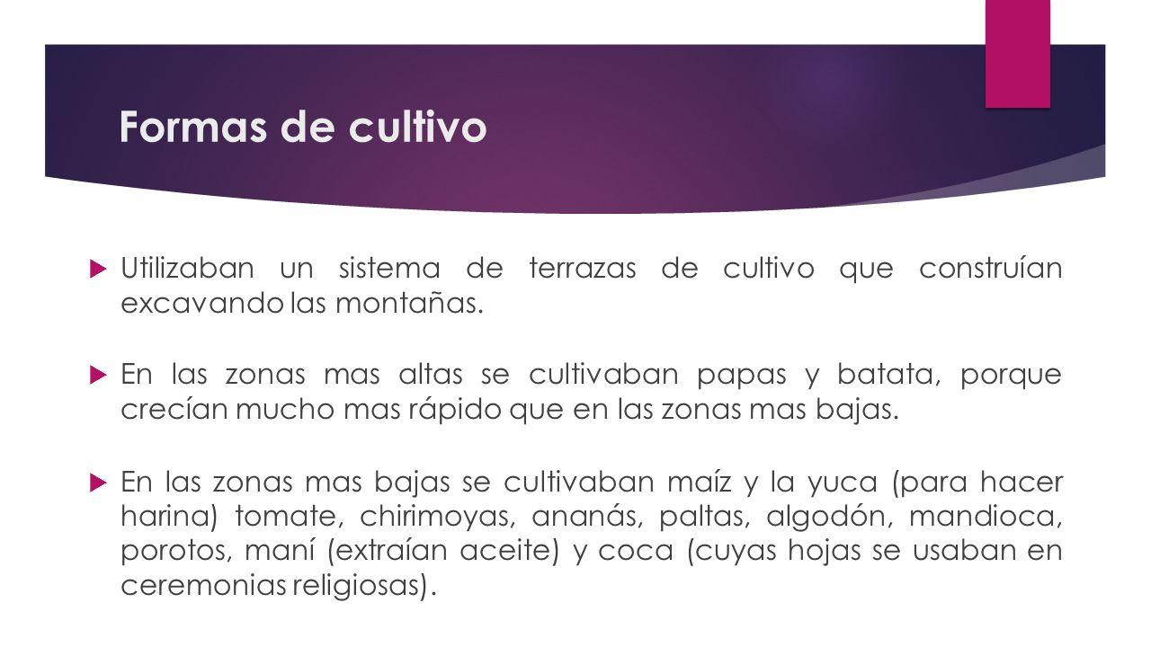 Formas De Cultivo Y Alimentos De Los Incas Ppt Video
