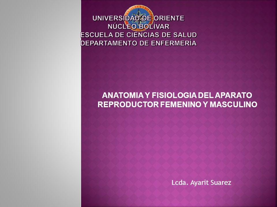 ANATOMIA Y FISIOLOGIA DEL APARATO REPRODUCTOR FEMENINO Y MASCULINO ...
