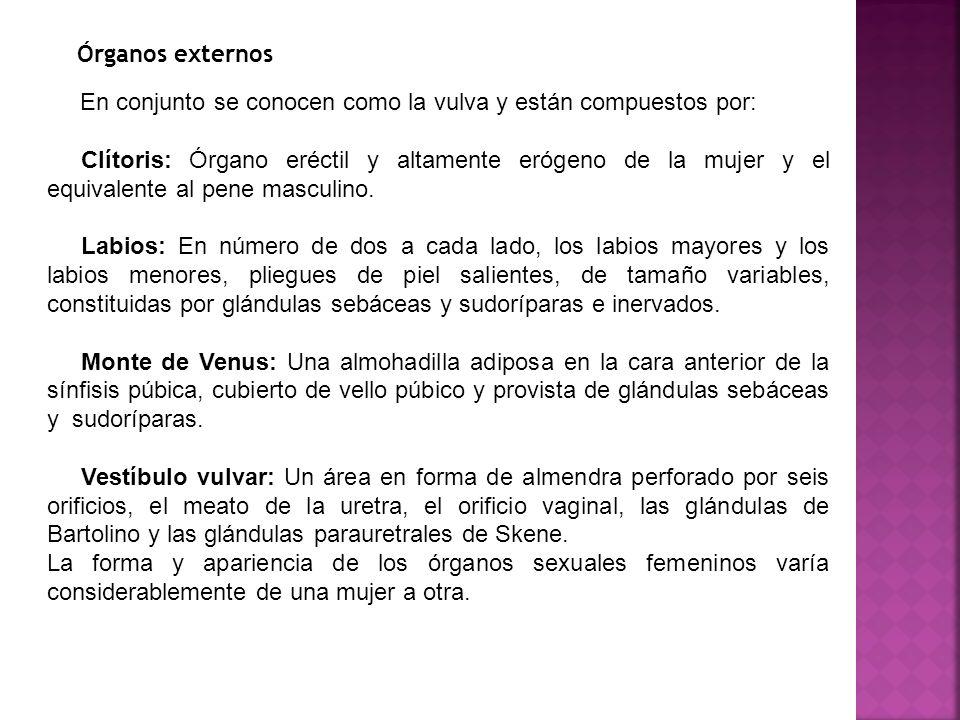 Hermosa Vulvar área De Anatomía Colección - Imágenes de Anatomía ...