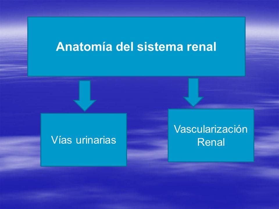 Anatomía funcional del sistema renal - ppt descargar