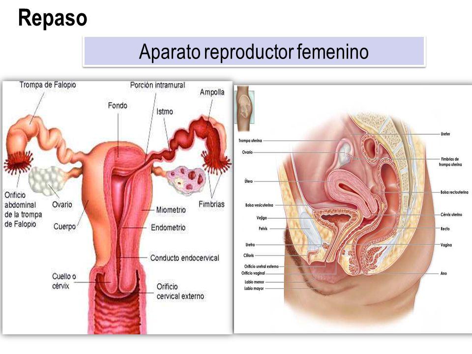 Enfermedades Del Aparato Reproductor Femenino - Venainternet.club