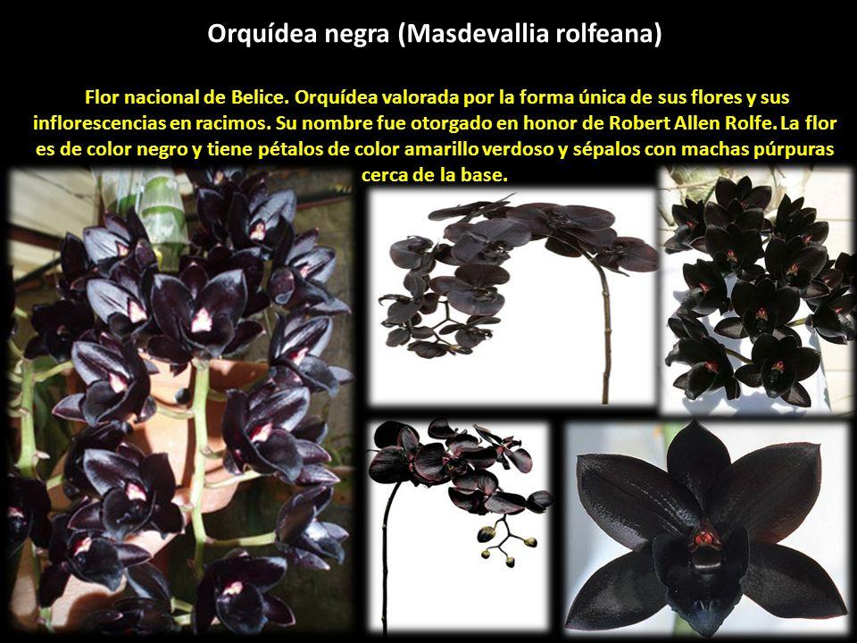 Las Flores Negras Ppt Descargar