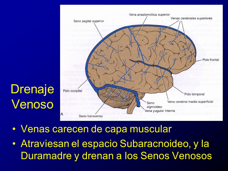 Vascularización del Sistema Nervioso Central - ppt video online ...