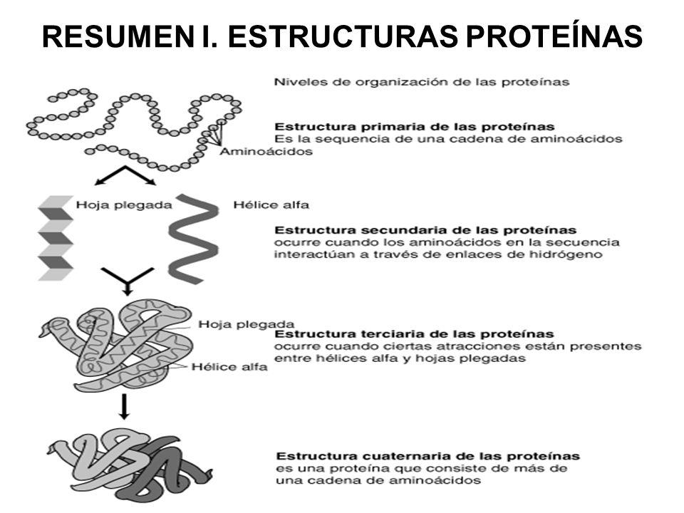 Tema 3 Las Proteinas Ppt Descargar