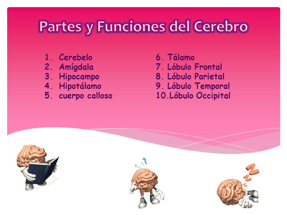 El Cerebro Humano. - ppt descargar