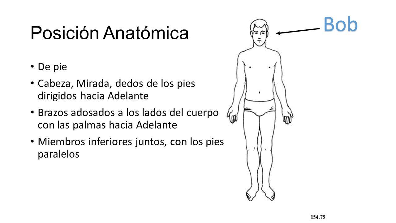 ANATOMÍA HUMANA INTRODUCCIÓN. - ppt video online descargar