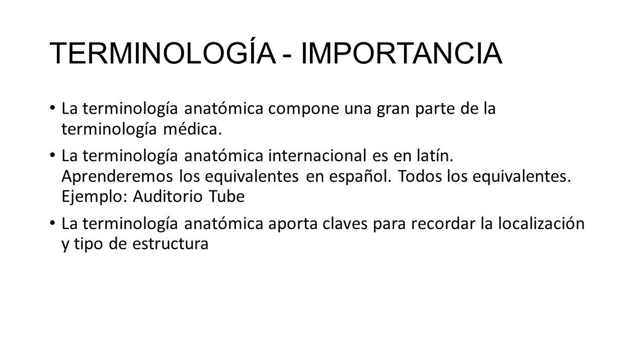 Magnífico Terminología Médica Y Anatomía Molde - Anatomía de Las ...