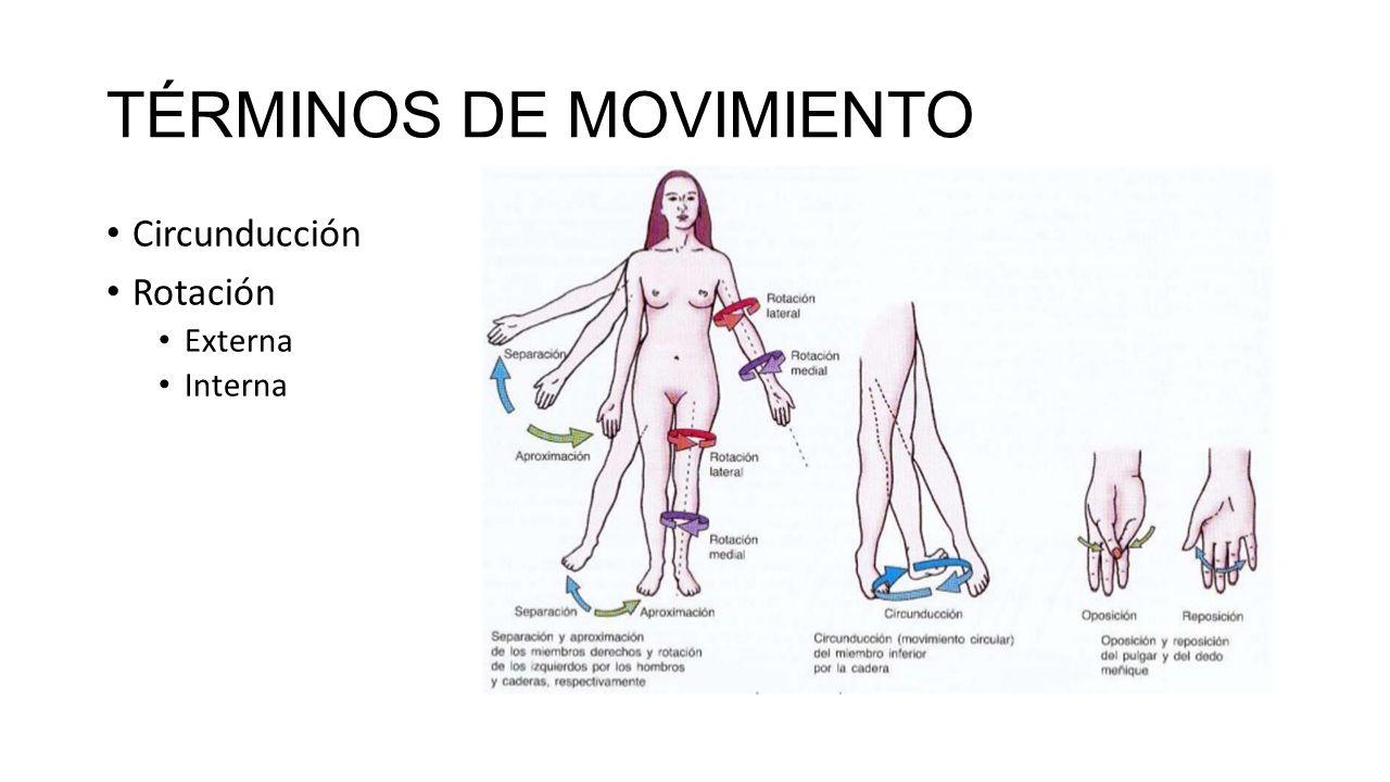 Único Supinación Definición Anatomía Bandera - Imágenes de Anatomía ...