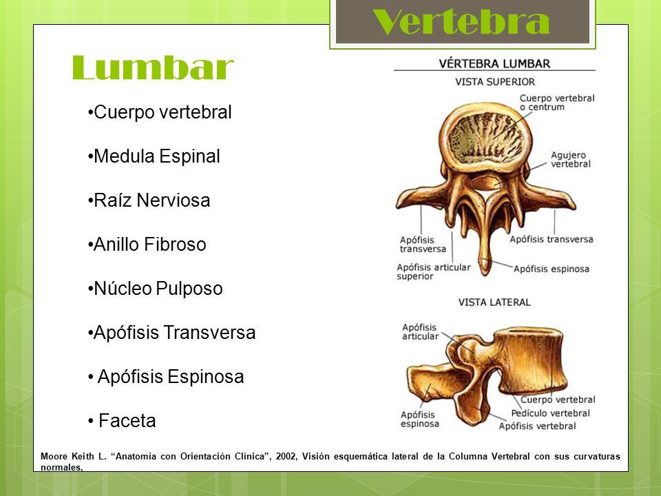 Traumatología y Ortopedia I - ppt video online descargar