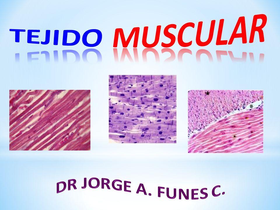 TEJIDO MUSCULAR DR JORGE A. FUNES C.. - ppt descargar