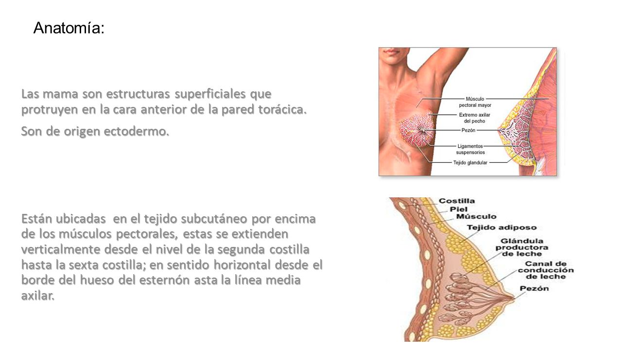 Mediastino Anatomía: Limites: - ppt descargar