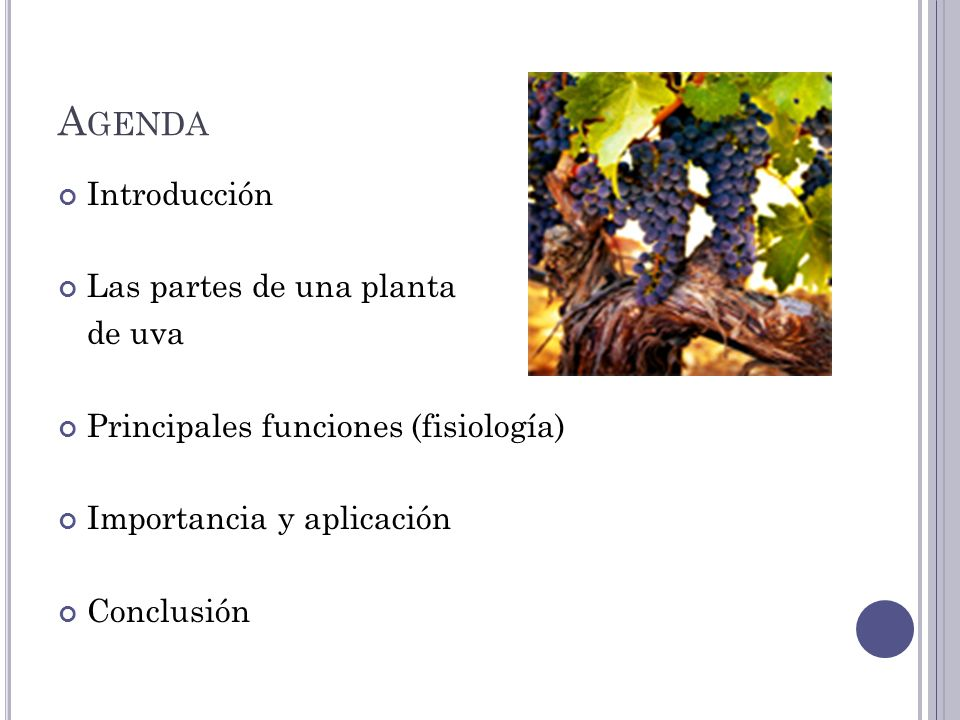 La fisiologia de una Planta de Uva - ppt descargar