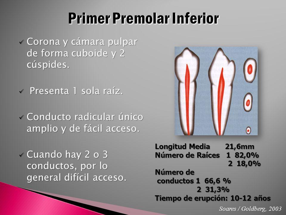 Anatomía y Apertura a la Cámara Pulpar - ppt video online descargar