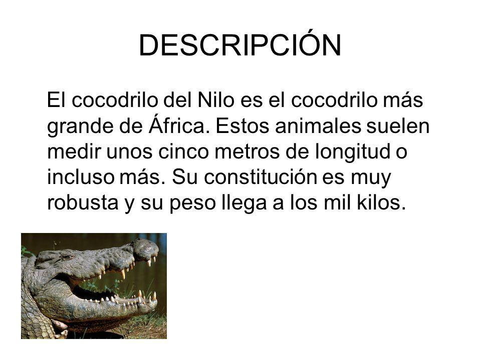 EL COCODRILO DEL NILO Índice: -1. Descripción -2. Características ...
