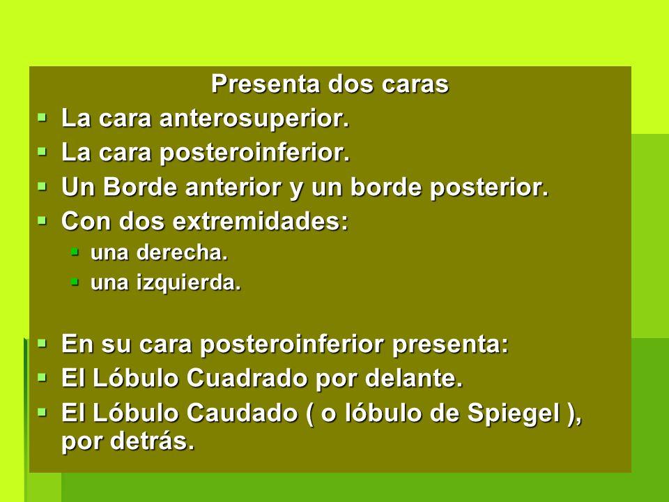 Encantador Uñas Anatomía Colombo Bandera - Anatomía de Las ...