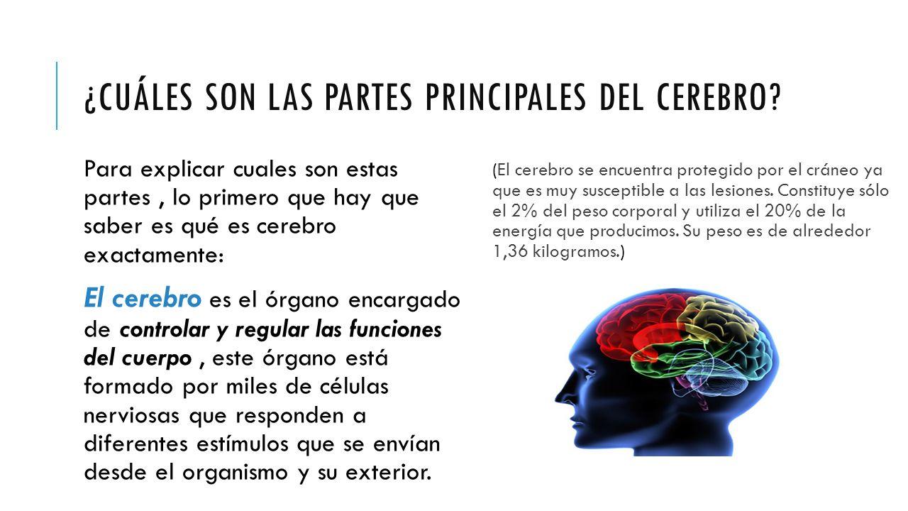 Partes y funcionamiento del cerebro humano - ppt video online descargar