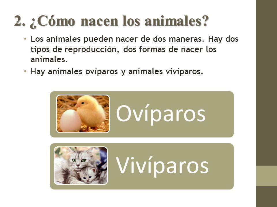 Los Seres Vivos 2 Los Animales Ppt Video Online Descargar