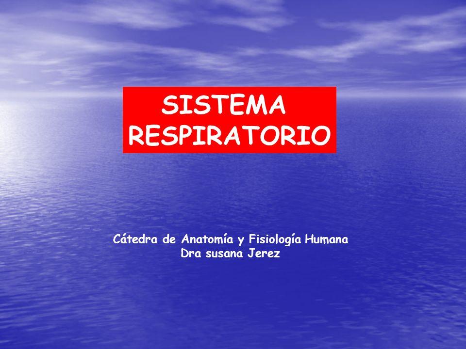 Cátedra de Anatomía y Fisiología Humana - ppt descargar