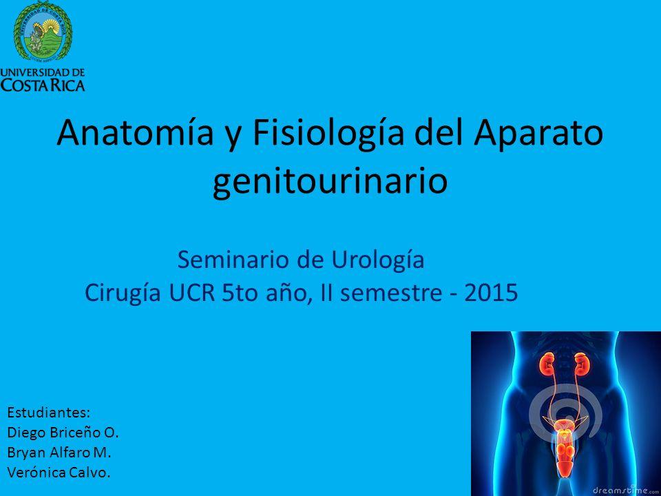 Anatomía y Fisiología del Aparato genitourinario - ppt descargar