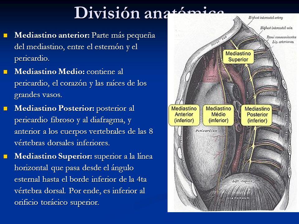 TUMORES DE MEDIASTINO Dr. E. Manuel Alvarado Arce - ppt video online ...