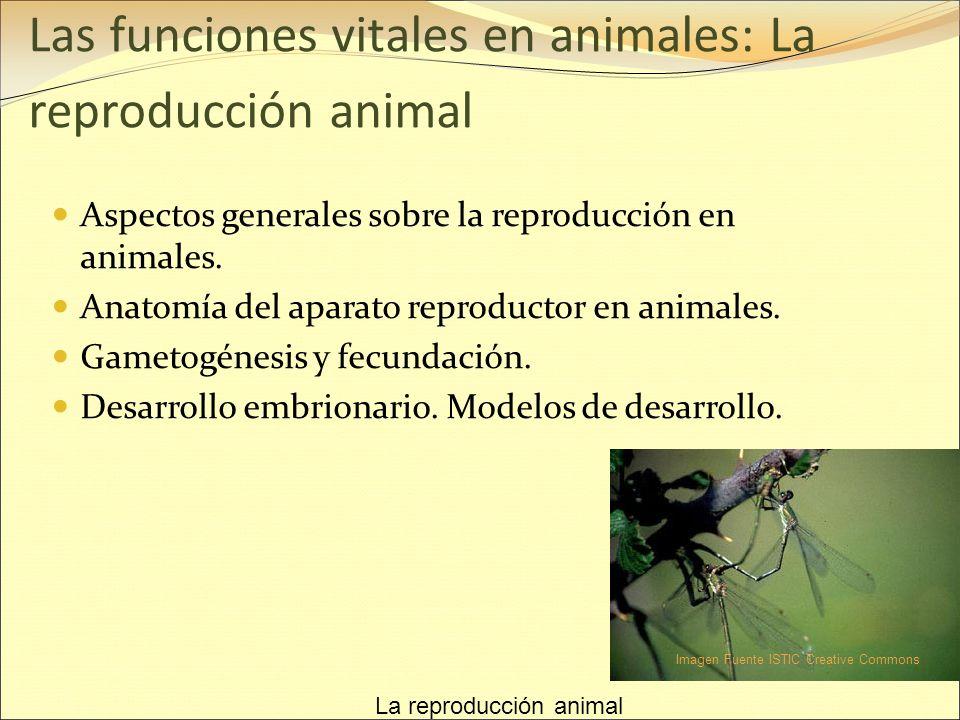 Las funciones vitales en animales: La reproducción animal - ppt ...
