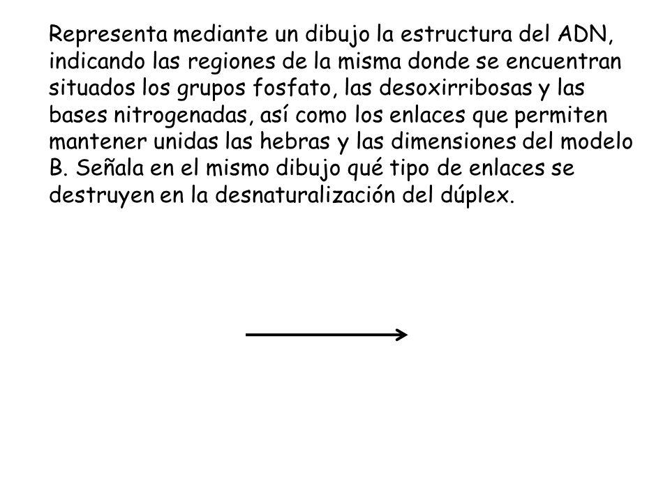 Tema 6 Los ácidos Nucleicos Ppt Video Online Descargar